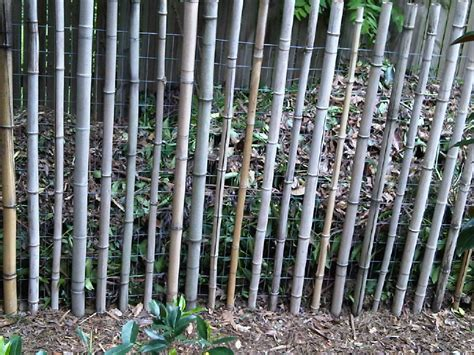 bamboo l photo bamboo ideas pictures