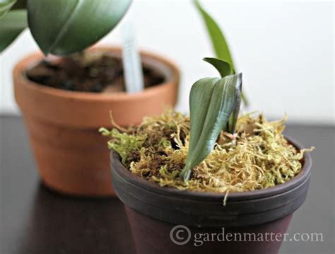 growing and repotting orchids it s easier than you think hearth vine formerly garden matter