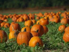 pumpkin patches pumpkin patch angela clayton s costumery creations