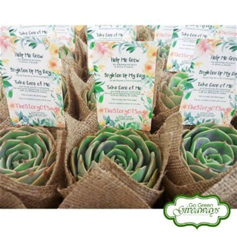 Corporate Event Giveaways - where to buy succulents for giveaways in the philippines happy pinay mommy