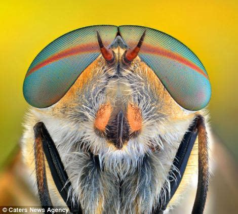 does my bug look big in this: incredible super close up