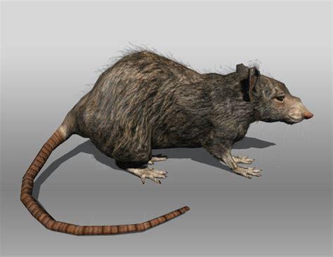 rat model 2 rat animations 3d 3ds