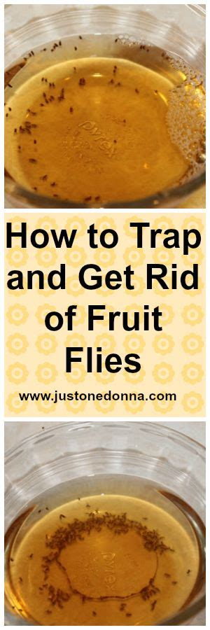 7 Ways To Get Rid Of Fruit Flies by We The O Jays And Donna D Errico On