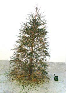 my christmas tree died i think my tree took some meth while i was pics