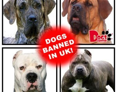 banned breeds pit bull terrier archives dogs center in carlisle