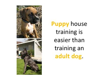 adult dog house training dog house training makes it easy for you and your pet