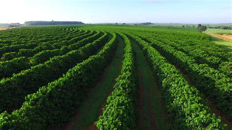 coffee plantation wallpaper coffee plantation stock footage video shutterstock