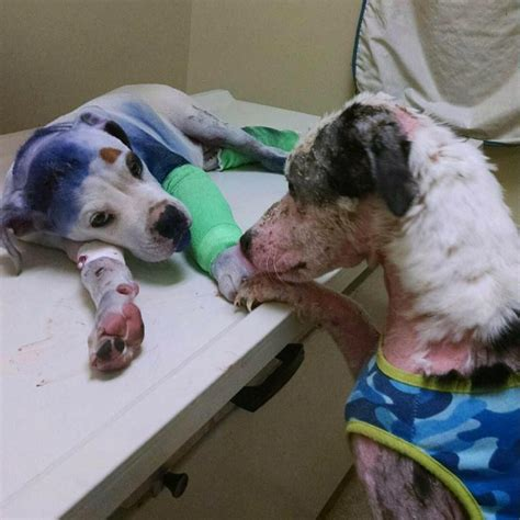 dog comforts dog comforts friend who s going through a tough time
