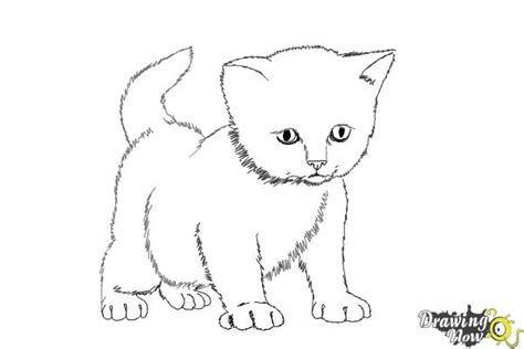 Drawing Kittens by How To Draw A Kitten Step By Step Drawingnow