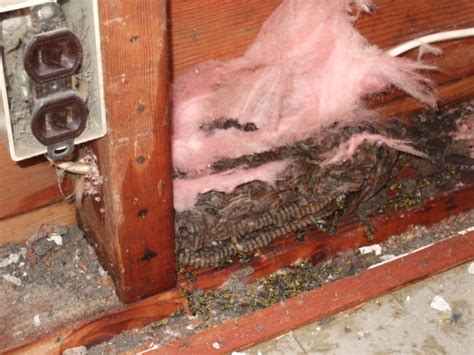bees nest in siding of house bees nest in siding of house 28 images siding days 2 4 or when bees attack fixing