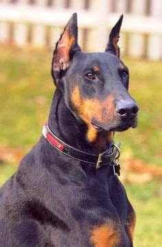 his name was my with a remarkable doberman pinscher books cooper is a 14 month rescue after losing my 8 year