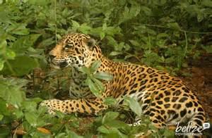 Creek Jaguar Stann Creek District Belize Vacation Hotels Resorts