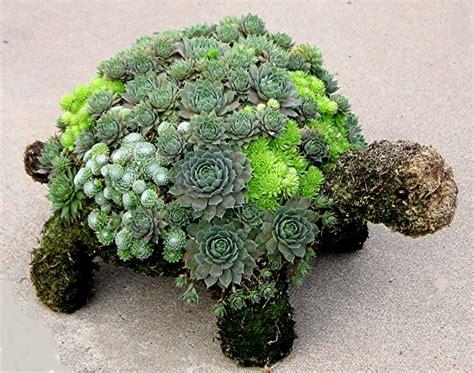 turtle succulent planter plantes succulentes dans le jardin esp 232 ces et arrangements