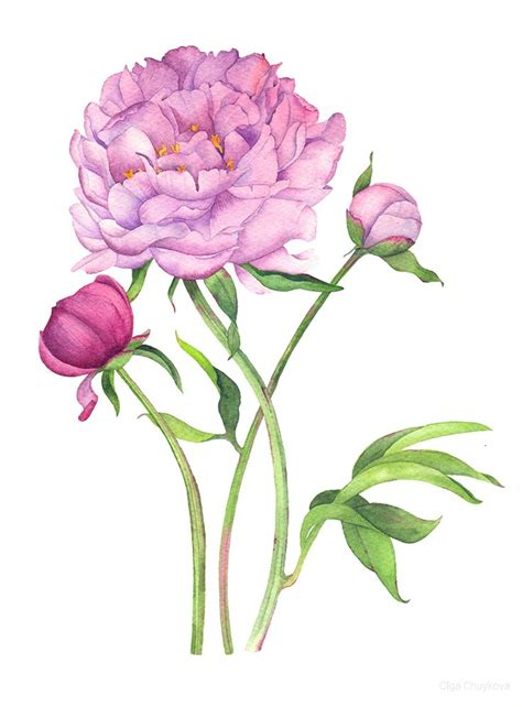 watercolor tattoo peony peony watercolor on behance peony