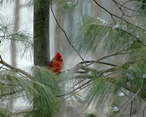 how to attract cardinals to a bird feeder bird feeders