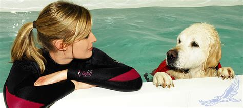 hydrotherapy for dogs hawksmoor hydrotherapy dedicated to excellence