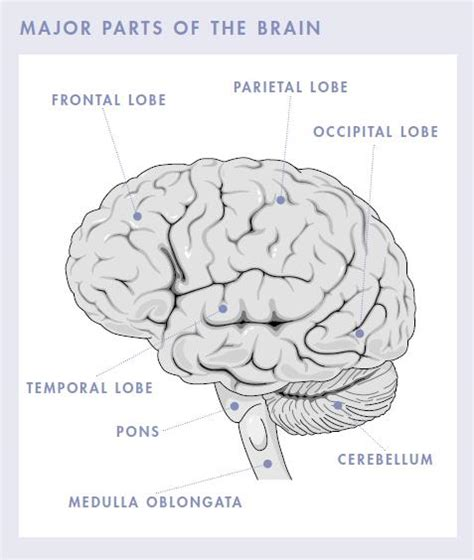 Brain Tumor Symptoms Signs To Watch Out For