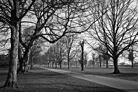 fotos en blanco y negro editor foto gratis 193 rboles parques blanco y negro imagen