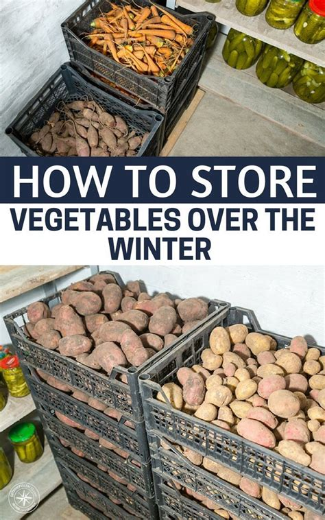 store vegetables   winter modern