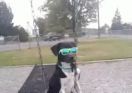 swinging gif popular sunglasses gif swinging discover share gifs