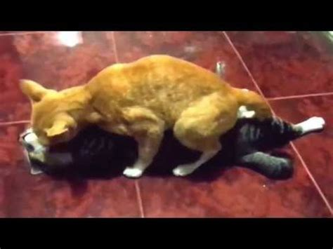 dogs mating up dogs mating up and get stuck animals mati doovi