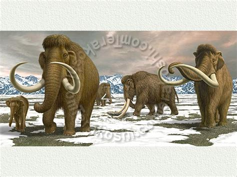 wooly mammoth ice age mammuthus a family of woolly mammoth in the ice age