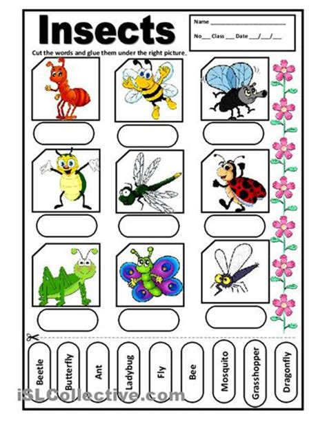 insects for kindergarten 17 best images about insects worksheet teaching animals