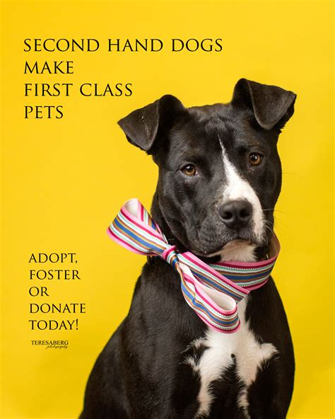 adopt rescue animal shelter dogs for adoption www pixshark images galleries with a bite