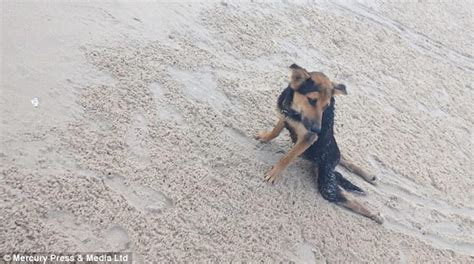 dragging back legs model raises thousands to rescue paralyzed she found on thai daily mail