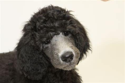 fda bones dozens of dogs ill from bone treats fda issues warning pet rescue report