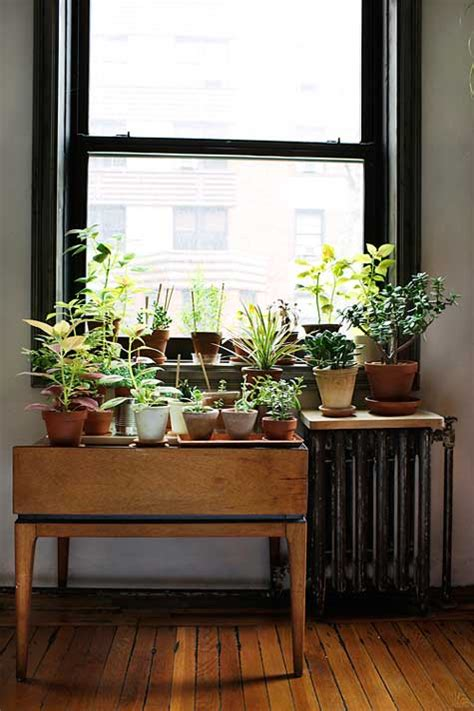 Plants For Bedroom Window Home Ec How To Save Your Plants And Your Money