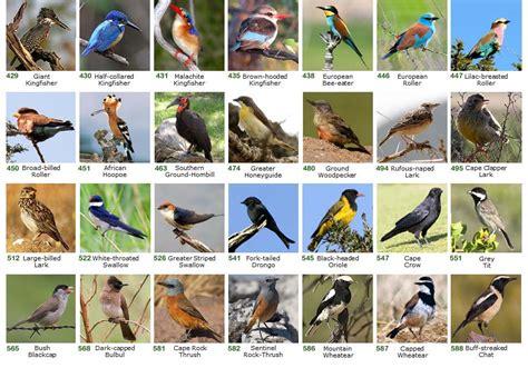 a list of birds birds of prey