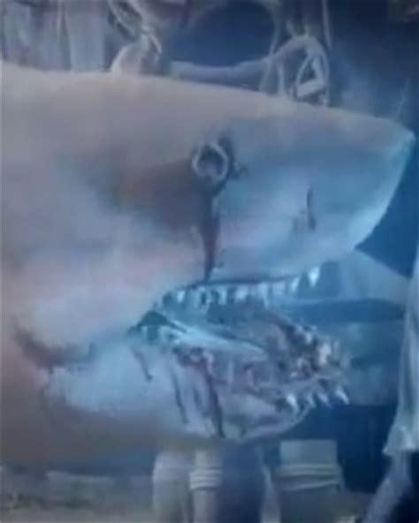 film ghost shark syfy follows up sharknado with ghost shark trailer and
