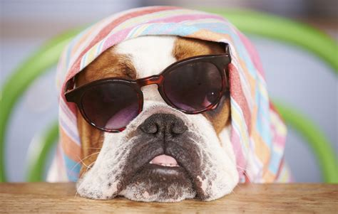 how to keep dogs cool outside tips for keeping your cool this summer apartmentguide