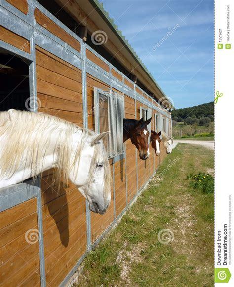 stall dã sseldorf cavalli nella stalla immagine stock immagine di bianco
