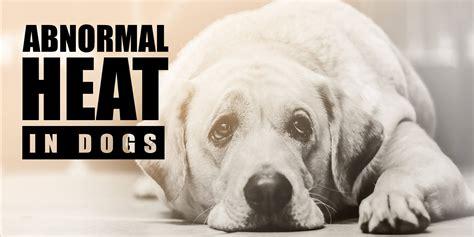 puppies heat estrous cycle in dogs merck dogs breed sierramichelsslettvet