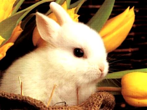 cute rabbit hd wallpaper central wallpaper cute little rabbits hd wallpapers