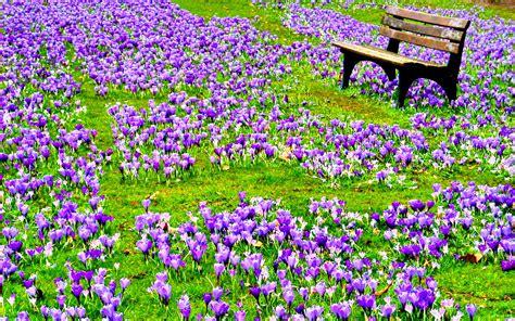 beautiful spring flowers beautiful spring flower wallpaper backgrounds