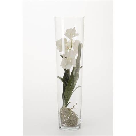 orchidee vanda blanc dans vase transparent h 70 cm