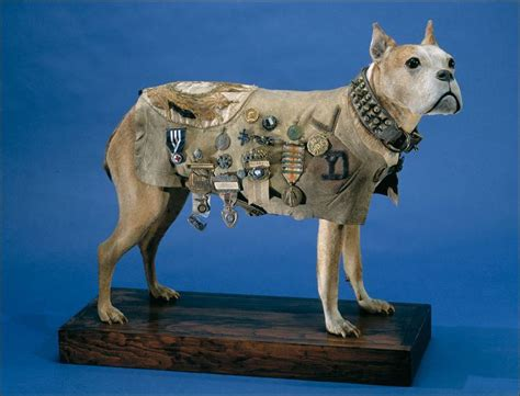 Sergeant Stubby History Canine Soldiers Earn Accolades Toledo Blade