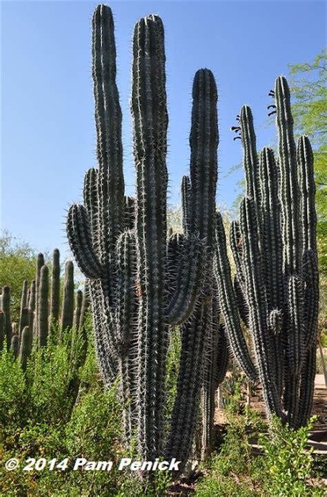 visit  desert botanical garden  chihuly exhibit