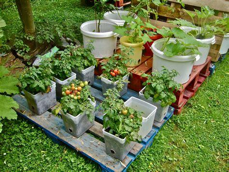 Container gardening on pallets a success (Willem Van