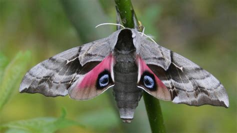 what is the scientific name for a what is the scientific name for a moth reference