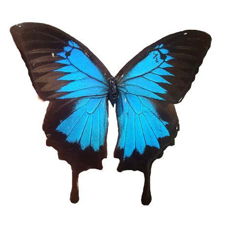 Butterfly Wings real butterfly wing jewelry butterfly wing jewelry blue