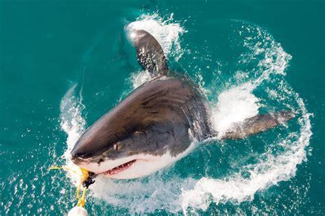 la gabbia degli squali sudafrica