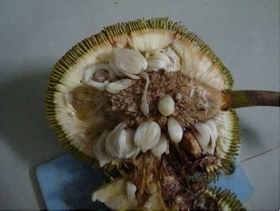 Borneo Murah Asli Kalimantan buah buahan langka asli kalimantan terpaling