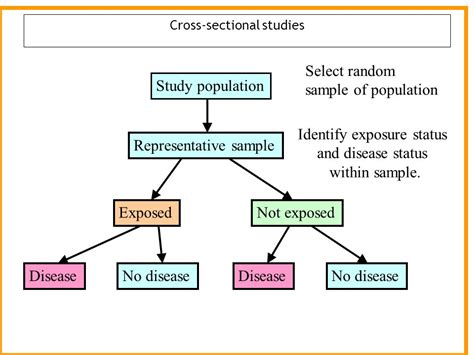 how to do a cross sectional study cross sectional studies ppt download