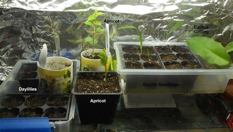 growing greener in the pacific northwest seed starting in