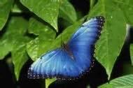 indoor butterfly garden uk butterfly jungles