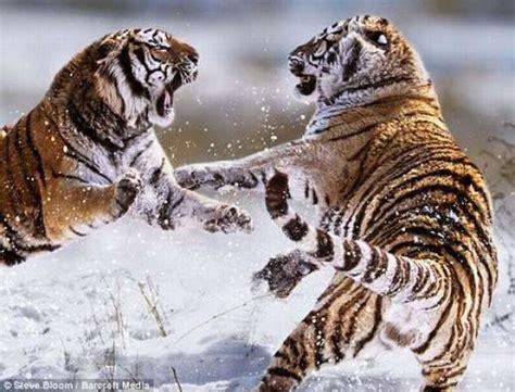 animal fight  pics